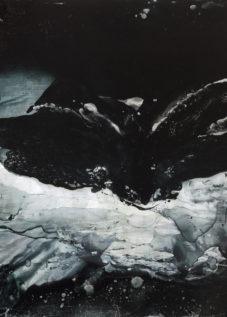Butterfly Phoenix by Alice Cescatti